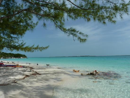 Great Exuma: Stocking Island - Beach at Chat'n'Chill