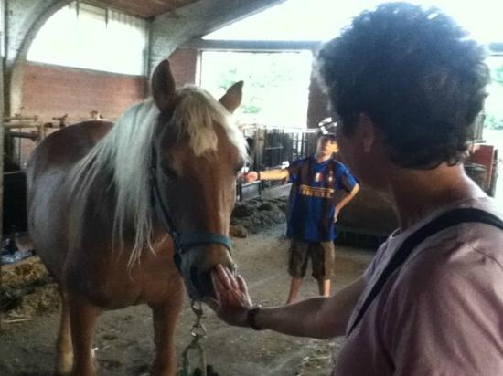 Agriturismo Villa Mocenigo: Sam teaches his mom about horses LOL