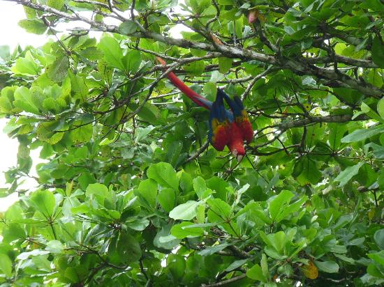 Finca Exotica Ecolodge: Macaw