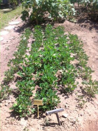 Villa Flow: Organic Garden