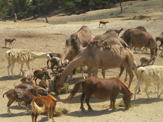 Kamelfütterung - Picture of Safari Aitana, Penaguila - TripAdvisor