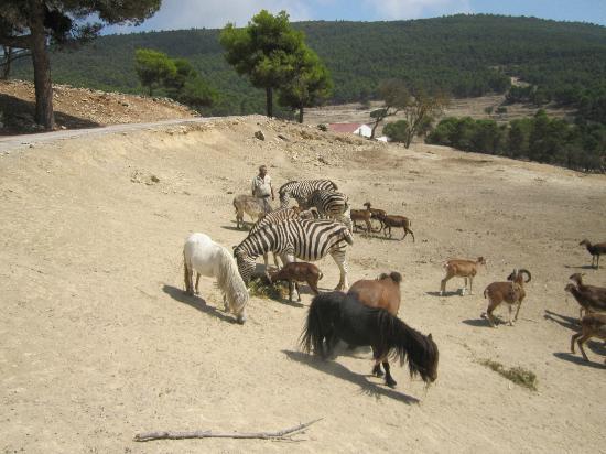 Foto de Safari Aitana, Peñáguila: Herde - TripAdvisor