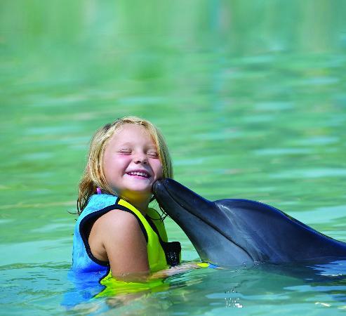 Dolphin Bay: Atlantis Dolphin Encounter