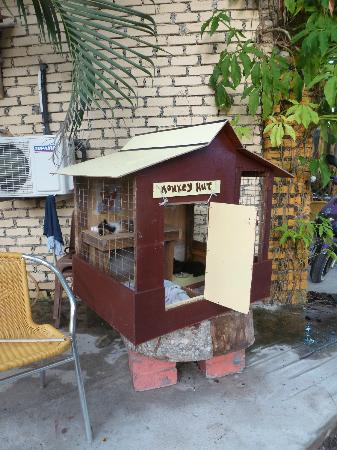 Monkey Hut: ...