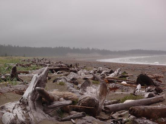Haida House at Tllaal : Einsame Pazifikküste unmittelbar beim Hotel