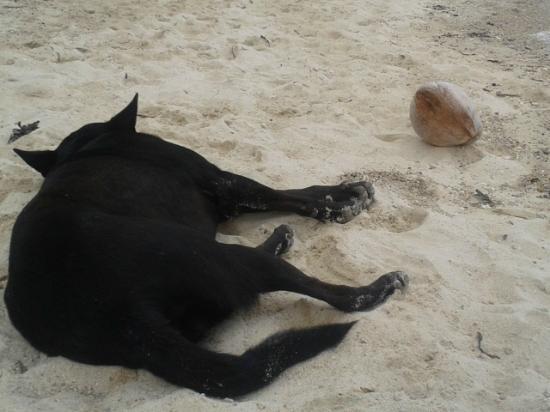 Coco Garden Resort: El perro de la playa
