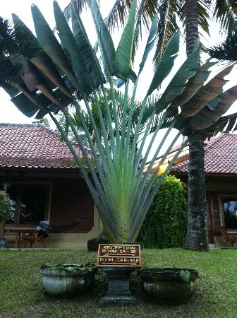 Puri Dajuma Cottages: hotel grounds
