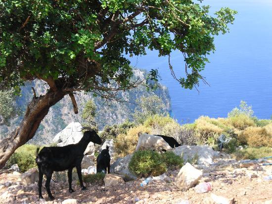 Villa Turk Apartments: Mountain Goats