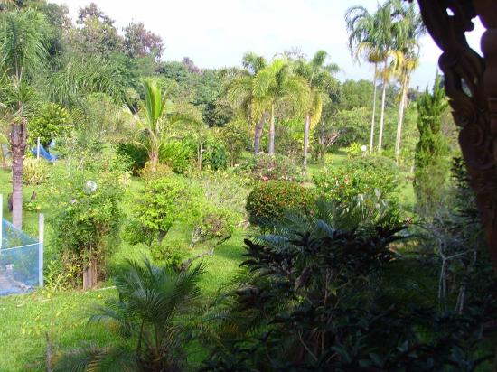Jaiya Mongkol Bed and Breakfast: View of garden/ grounds from our room