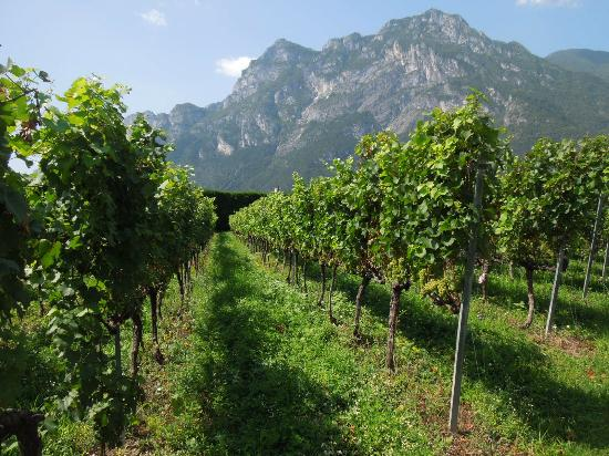 Hotel Al Maso : wine yards and mountains - prepare for this :)