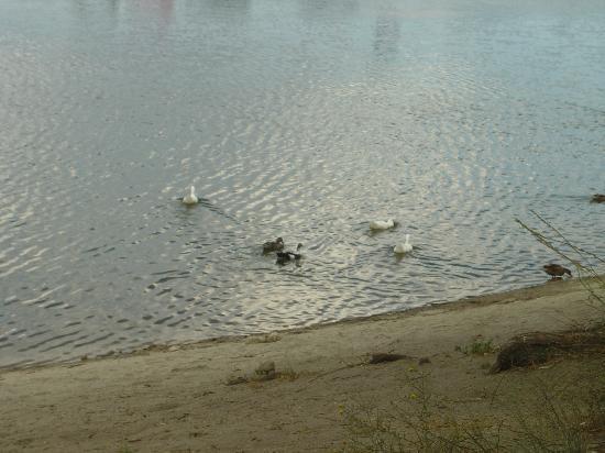 Hurkey Creek Campground Picture Of Lake Hemet Riverside