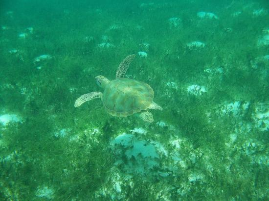 Buccament Bay Resort: Tobago Cays day trip - swimming with turtles