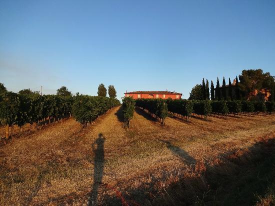 Agriturismo Podere La Rocca: Casa al Bosco et ses vignes