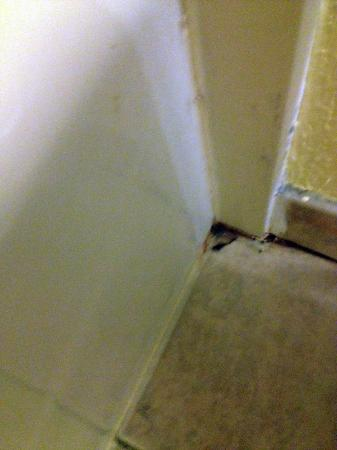 Super 8 Latham/Albany Troy Area: Bug and Mold