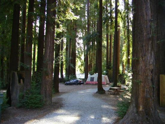 Santa Cruz Redwoods RV Resort: Tent sites available.