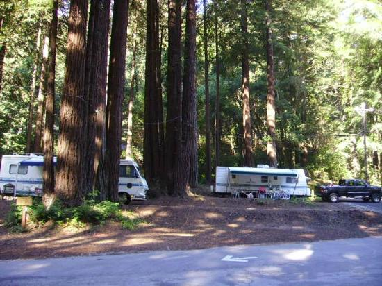 Santa Cruz Redwoods RV Resort: Awesome river view sites.