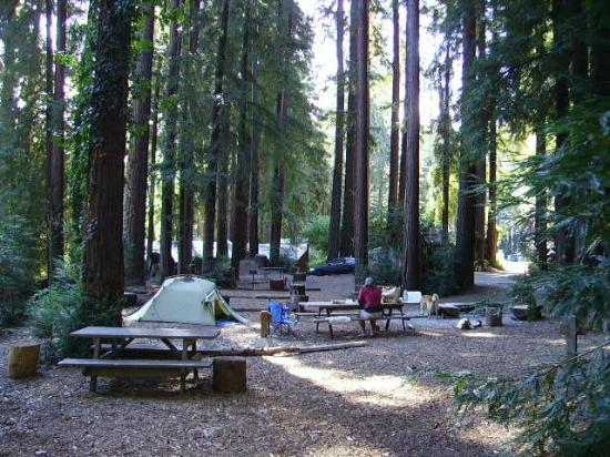Santa Cruz Redwoods RV Resort: Tent sites with BBQ grills, picnic table and community firepit.
