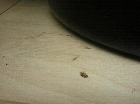 Quality Inn Oceanfront: Dead bugs in cabinets...