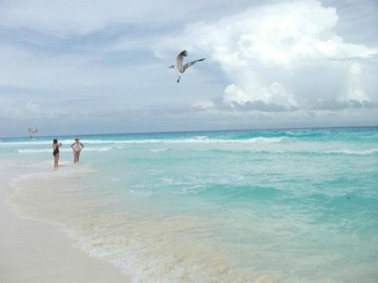 Flamingo Cancun Resort Playa