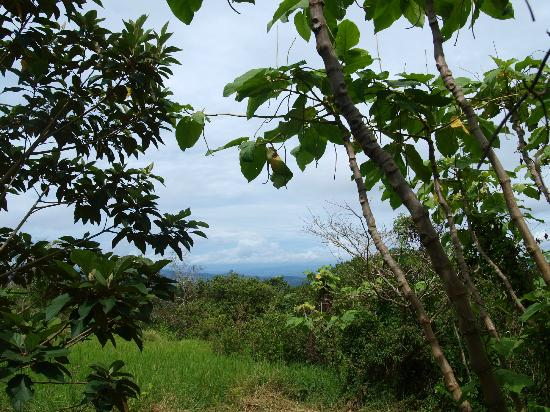 Tilarán, Costa Rica: View of Lago Arenal from the planting area!