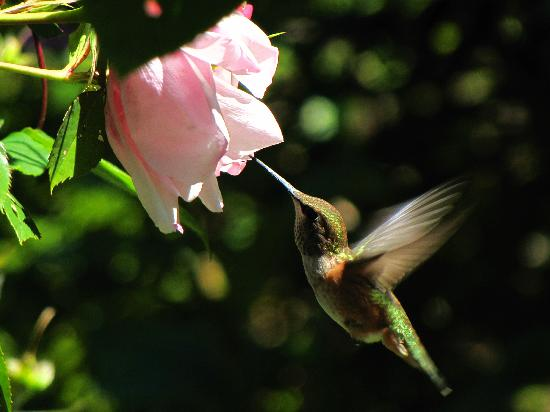 Summerhill Guest House: A favorite hummer!