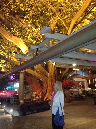 Figueira Rubaiyat: The tree makes a complete canopy for the restaurant