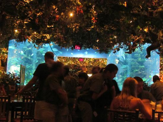 Rainforest Cafe Reviews Galveston Tx