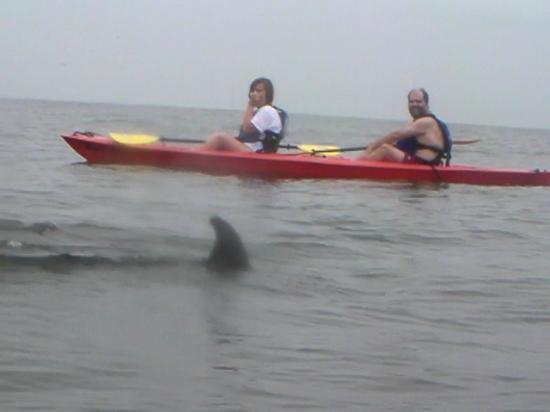 Kayak Nature Tours Ltd Dolphin Adventure Tour Virginia Beach Va