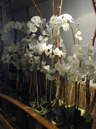 welcome homes: Orchids in the hall