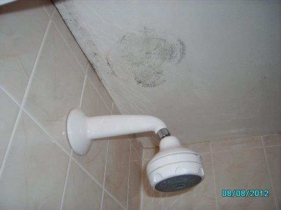 Norfolk Lodge Hotel: Mould above shower.