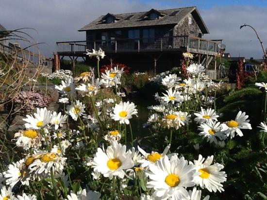SeaQuest Inn Bed & Breakfast: Many wildflowers on the property