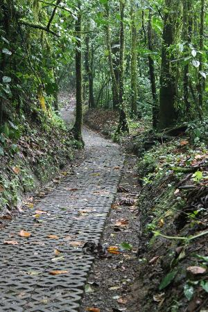 Arenal Observatory Lodge & Spa: Jungle trail to waterfall and bridge