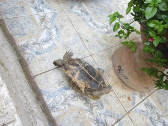 cute turtle in Nur Pension(now missing)
