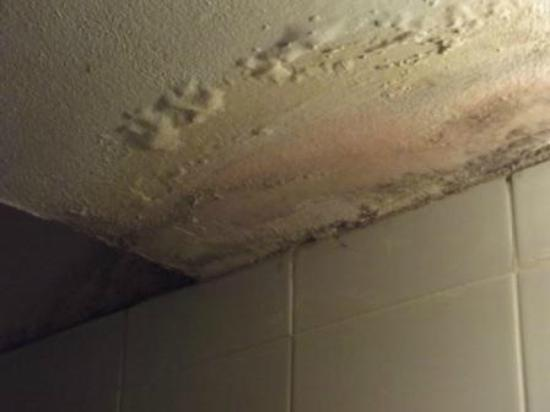 Arlozorov Hotel: Yarden Beach Appt alternative accom given- bathroom ceiling
