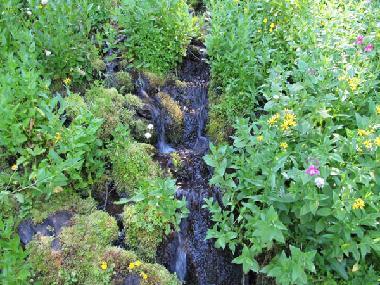 Castle Crest Trail Stream