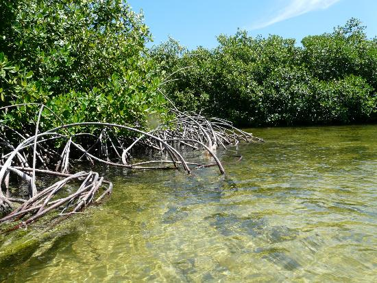 Lac Bay: Kayaking through the mangroves Bonaire