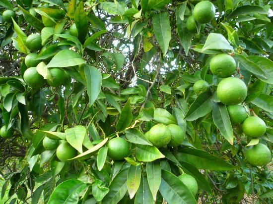 Alberi da frutto foto di antico borgo agriturismo b b - Alberi frutto giardino ...