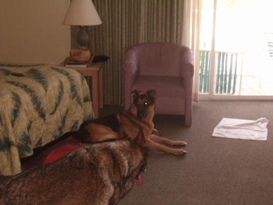 Coquina On The Beach: Adjoining room with friends pets