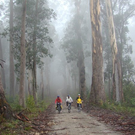 Snowy River Cycling Rail Trail Tours