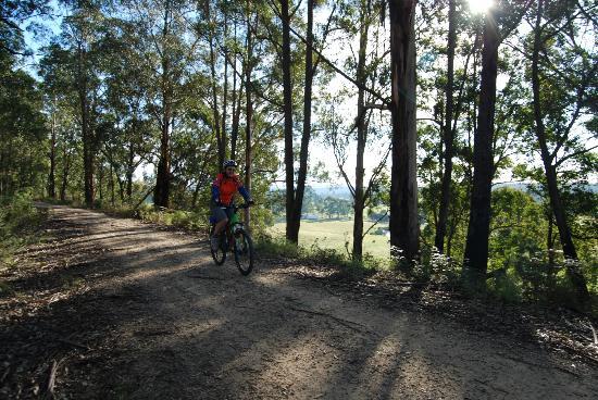 Snowy River Cycling Rail Trail Tours: East Gippsland Rail Trail