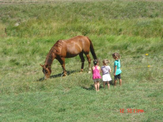 High Country Guest Ranch: Horses on the Ranch