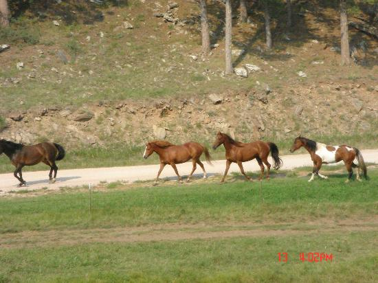 High Country Guest Ranch: A group of Horses galloping by... they were beautiful