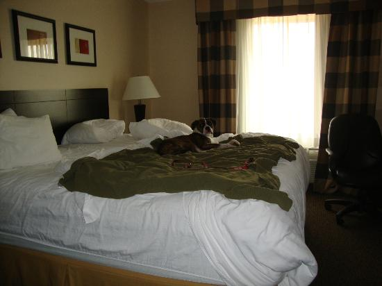 Holiday Inn Express Longmont : Our dog had enough of camping and was ready for hotel luxury.