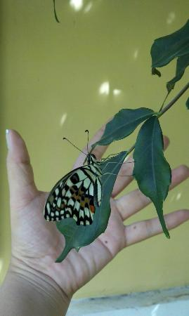 Butterfly Complex Center: Right by my hand. By: Doreen Young