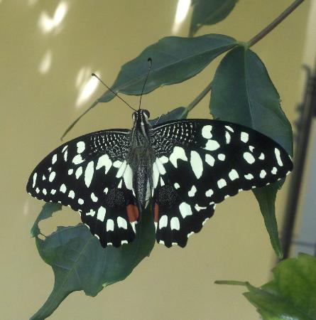 Butterfly Complex Center