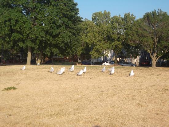 Tenney Park Seagulls