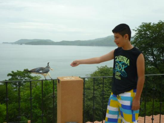 El Sabanero Beach Hotel: my oldest child feeding a local bird