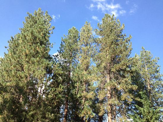 Pine Knot Guest Ranch: Blue skies!