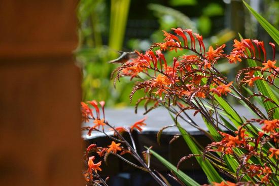 Orveas Bay Resort: flowers by the deck