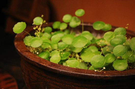 MaMa Hanok Guesthouse (Changdeok Palace): little plant